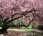 spring-tree-crop