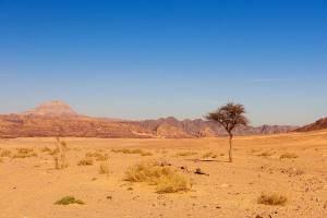 Sinai Wilderness