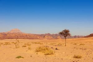 Sinai Wilderness